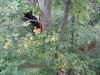 baumklettern-geocaching-13