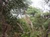 40-suedafrika
